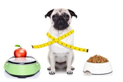 食事を前にメジャーが巻き付いた犬