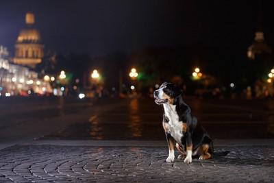 夜の街で座る犬