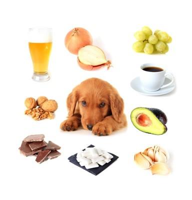 犬と危険な食べ物
