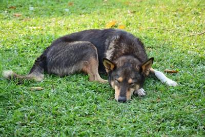 芝生の上で丸くなって眠る黒い犬