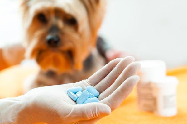ヨーキーと人の手に乗る青い錠剤