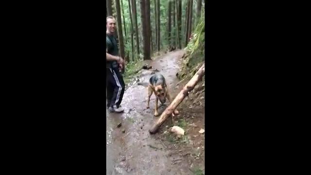カメラ見る男性と木を見る犬