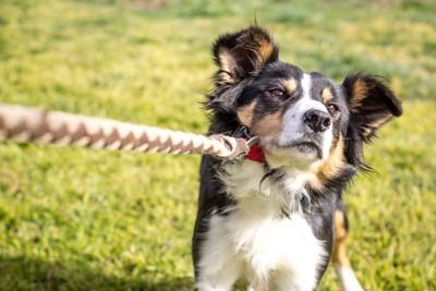 リードを引く、帰りたくない犬