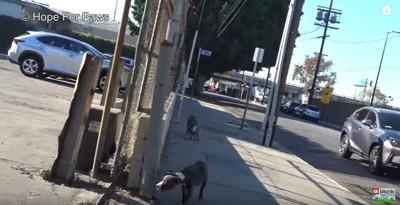 駐車場へ誘導される犬
