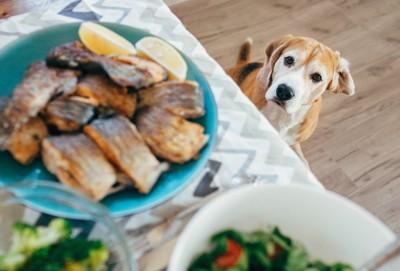 テーブルの魚料理を見上げる犬