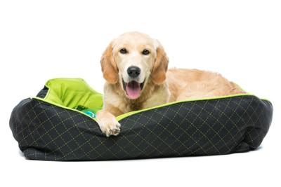 ベッドの中の犬