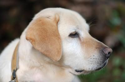 不満そうな犬の顔のアップ