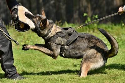警察犬の訓練の様子