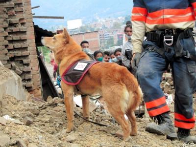 救助犬と救護隊 被災地