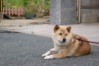 よそ見をしている犬