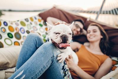 ハンモック上のカップルと犬
