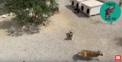 犬の群のエリア