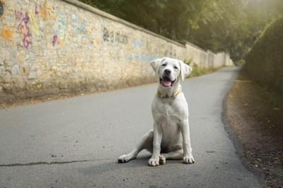 アスファルトに立つ犬