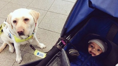 盲導犬と赤ちゃん