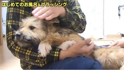 飼い主さんに抱っこされてリラックスしてる犬