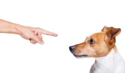 飼い主に指差されている犬
