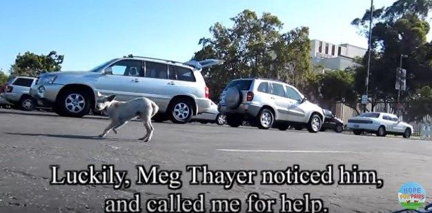 駐車場を走る犬