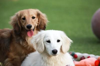 寄り添う2匹の子犬
