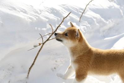 何かに注目する犬