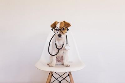 聴診器をつけて座っている犬