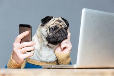 パソコンと携帯で調べ物をする犬
