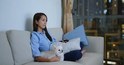 ソファーで一緒にテレビを見る女性とチワワ