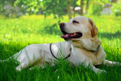 日陰でリラックスする犬
