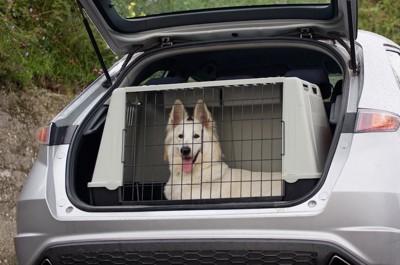 車に乗せられたケージの中の白い犬