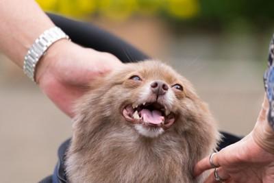 撫でられて嬉しそうな犬