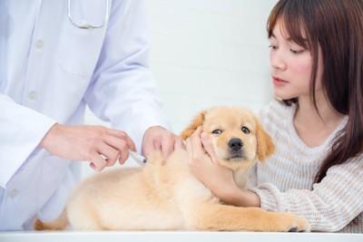 病院で注射されている犬を押さえる飼い主
