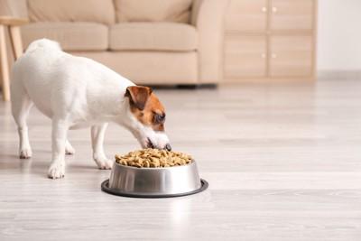 山盛りのフードを食べている犬