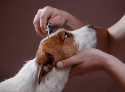 コームで頭を整えられている犬