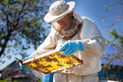 ミツバチの巣箱を検査する人