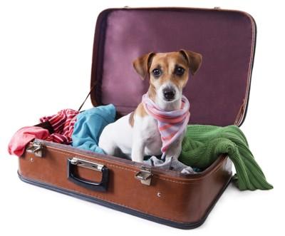 スーツケースの中に立つ犬