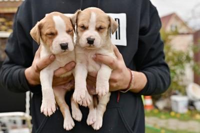 抱っこされている2頭の犬