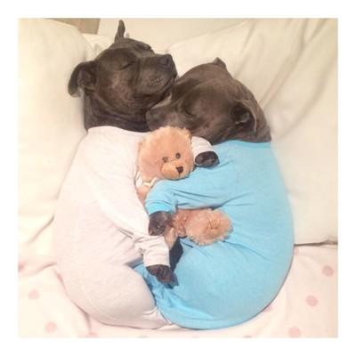 ぬいぐるみを抱っこしながら寝る犬たち
