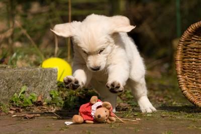 ぬいぐるみの上でジャンプする犬