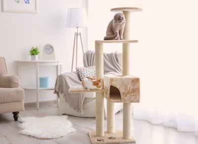 キャットタワーに登る二匹の猫