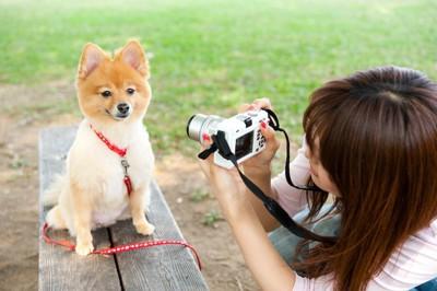 ベンチにお座りする犬にカメラを向ける女性