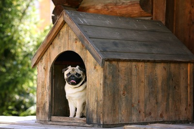 木製の犬小屋に入るパグ