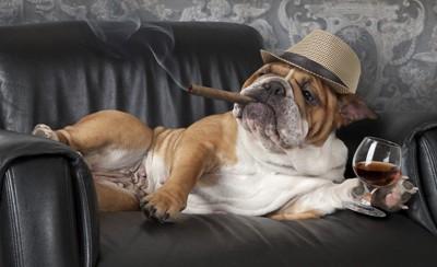 帽子と葉巻と犬