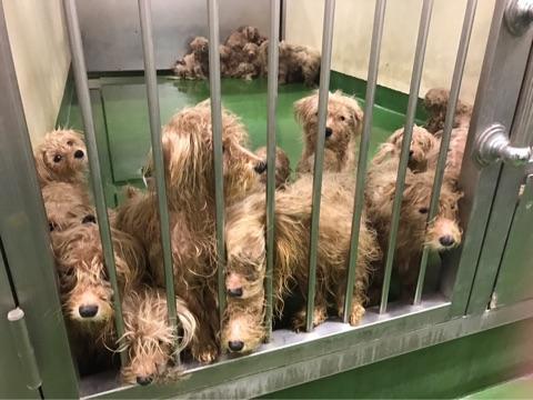 柵から鼻を出す犬たち