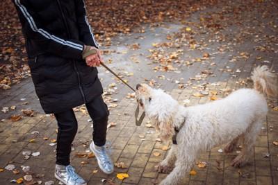 リードを噛む犬