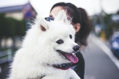 犬を抱っこして外を散歩する女性
