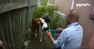 男性と3匹の犬
