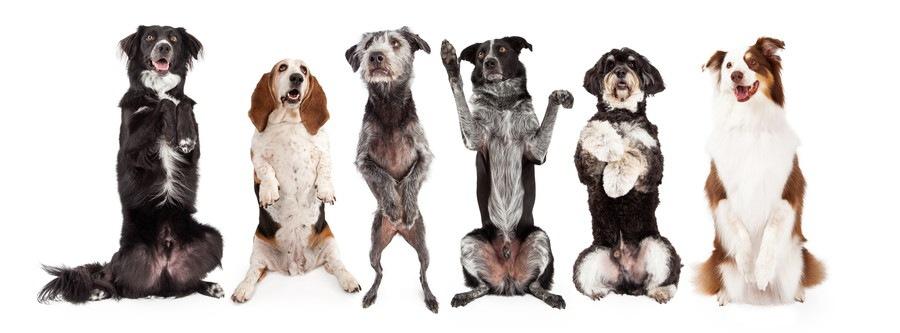 前足を上げる犬たち