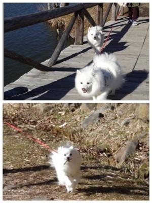 散策路を歩く犬