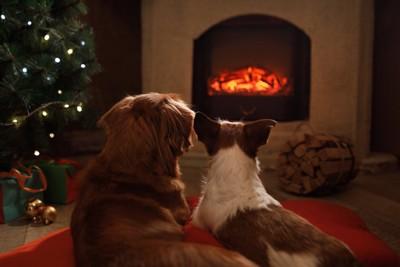 暖炉であたたまる二頭の犬の後ろ姿