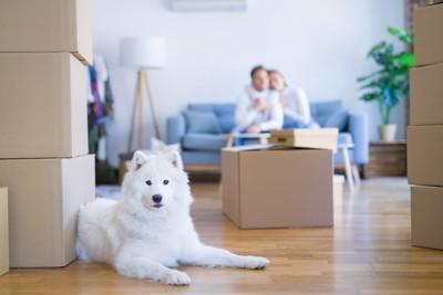 ソファーに座るカップルと引っ越しのダンボールのそばに伏せる犬