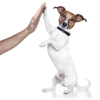 人の手とハイタッチする犬